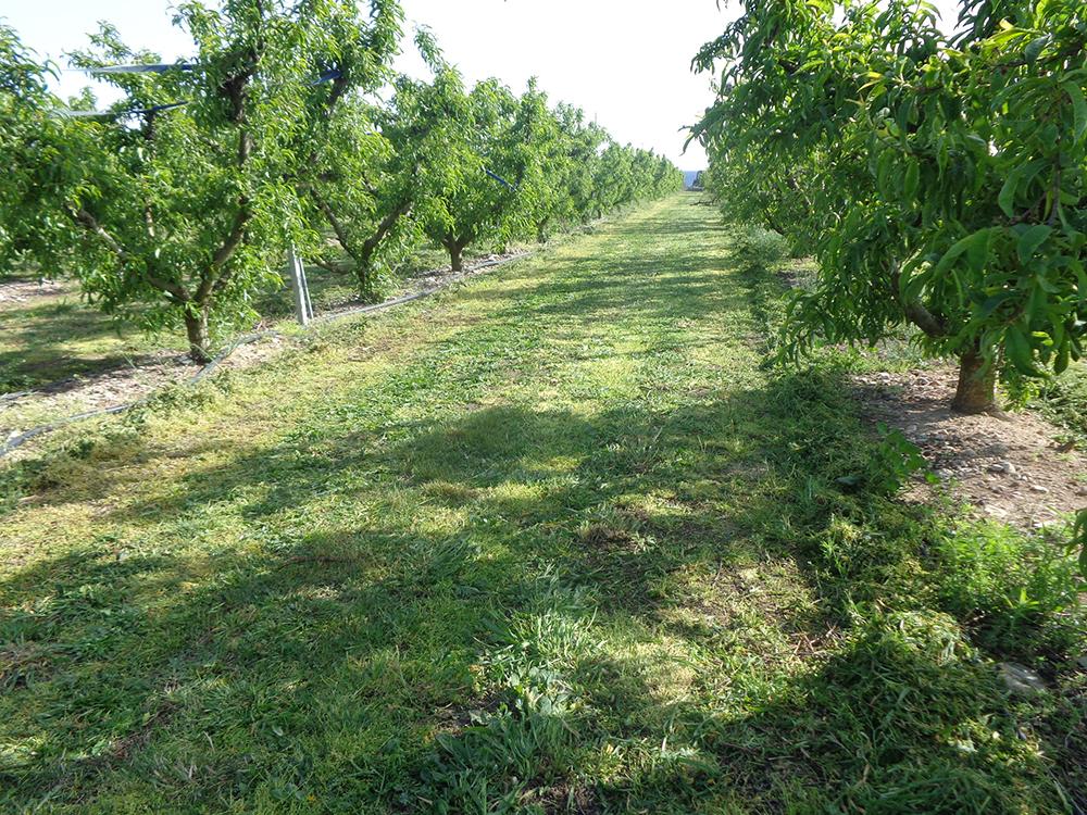 trituradora agricola tll-sl osmaq 4